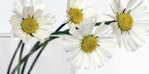 flowers-646637_640